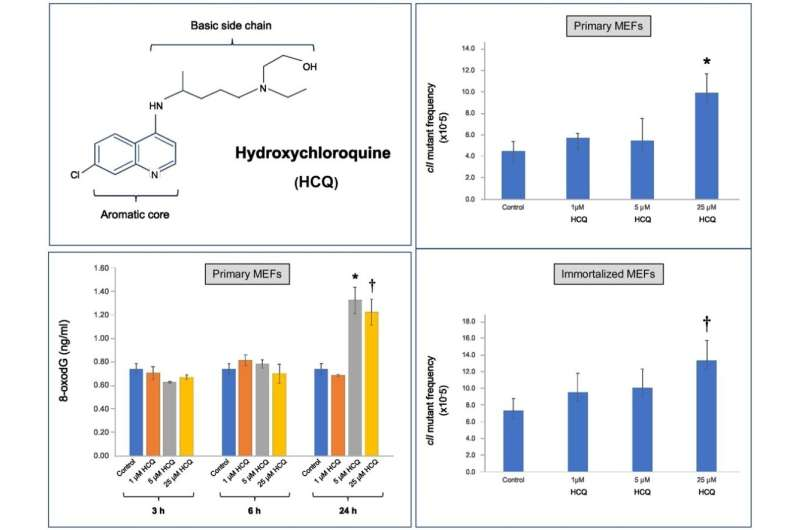 Study points to toxic potential of hydroxychloroquine in mammalian cells