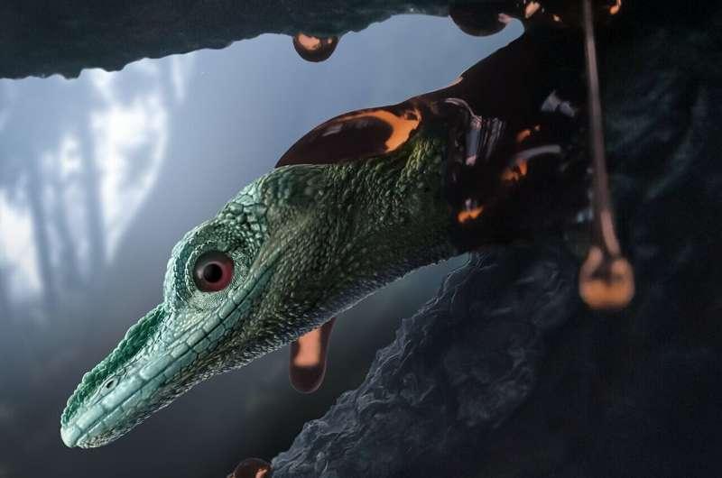 Study presents new species of bizarre, extinct lizard previously misidentified as a bird