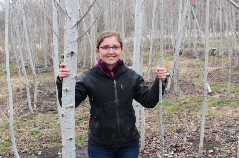 Study shows how aspen forests maintain the diversity needed to adapt to changing environments