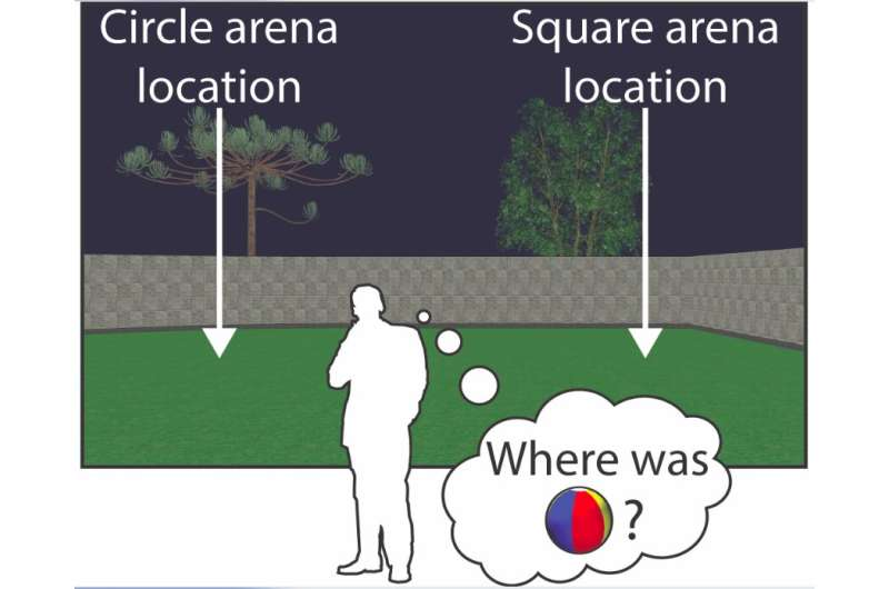 Study shows that remapping and realignment in the hippocampal formation predict context-dependent spatial behavior