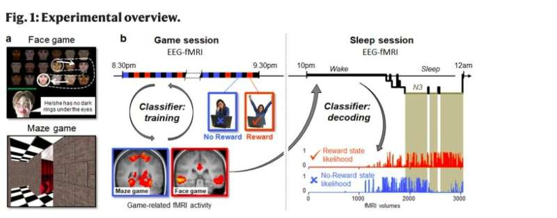 Study shows that rewarded life experiences are replayed and consolidated during sleep