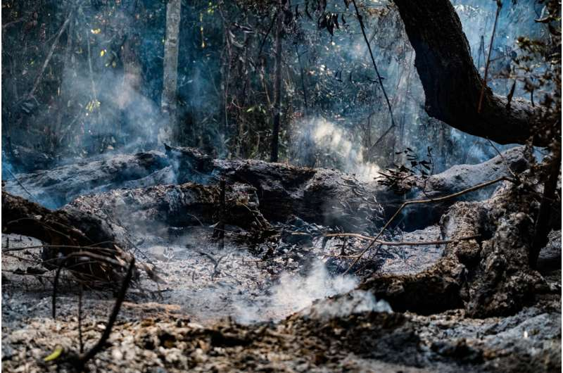 Study shows the impacts of deforestation and forest burning on biodiversity in the Amazon
