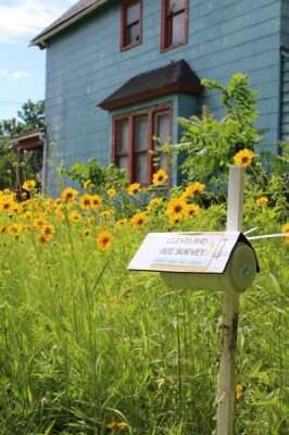 Study suggests native, city-living bees, wasps thrive in large green spaces, flowering prairies