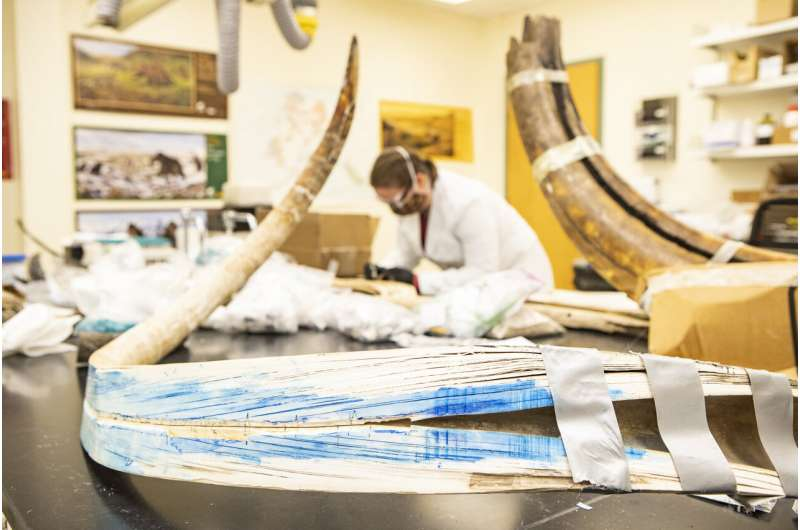 Study takes unprecedented peek into life of 17,000-year-old mammoth