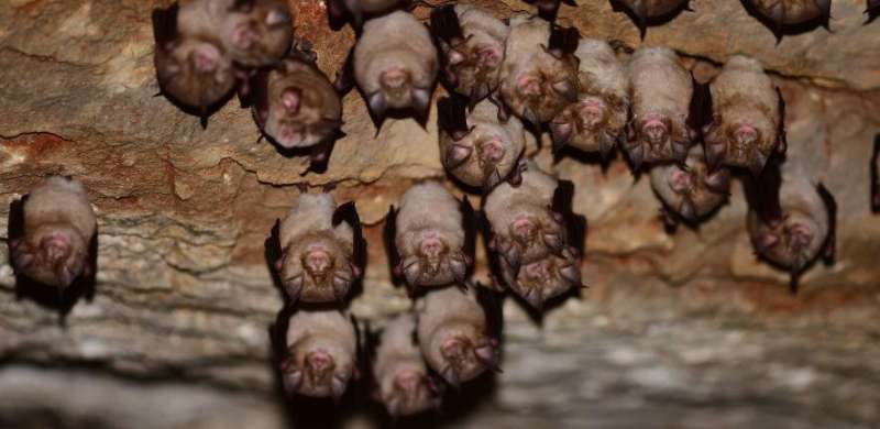 Study identifies genetic changes likely to have enabled SARS-CoV-2 to jump from bats to humans