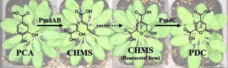 Supplying Sustainably Sourced Biomaterial Building Blocks from Plant Feedstocks