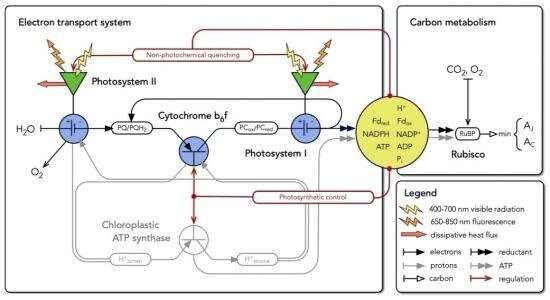 """""""Surge-protector""""-like enzyme controls the speed and efficiency of photosynthesis"""