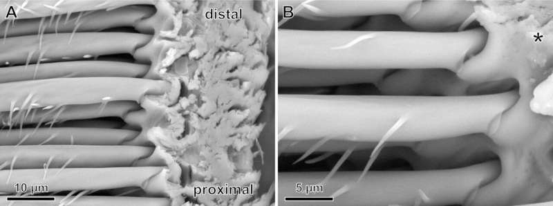 Surprising spider hair discovery may inspire stronger adhesives