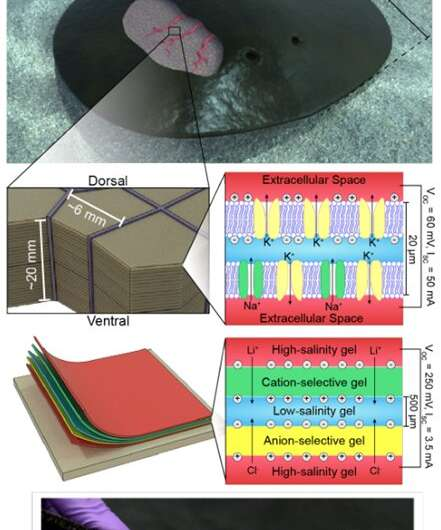 Sustainable, implantable electronics move one step closer