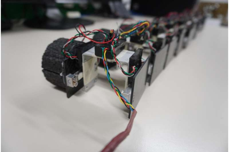 Swimming robot gives fresh insight into locomotion and neuroscience