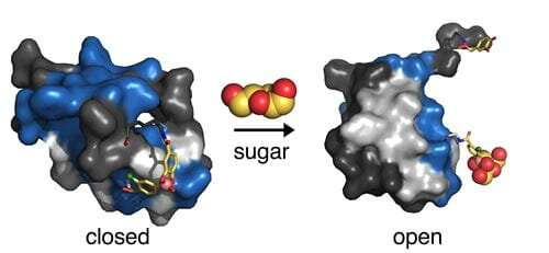 Synthetic hinge could hold key to revolutionary 'smart' insulin therapy