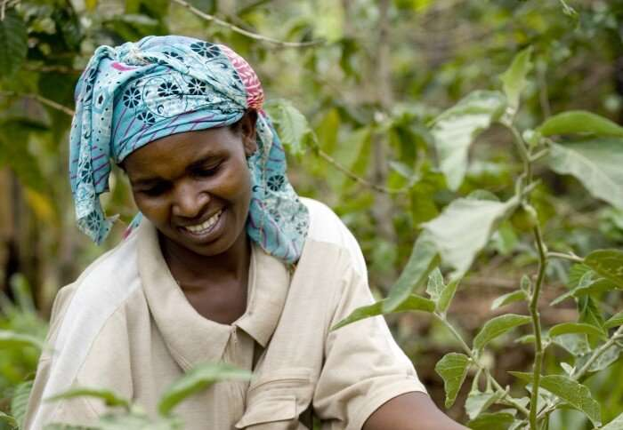 Systems approach is key to food security in Africa