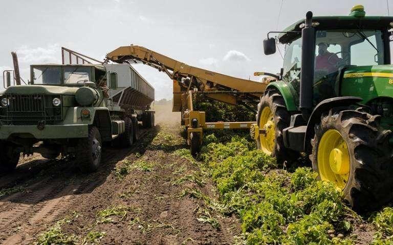 Tomando medidas para lograr Net Zero en el sector agrícola