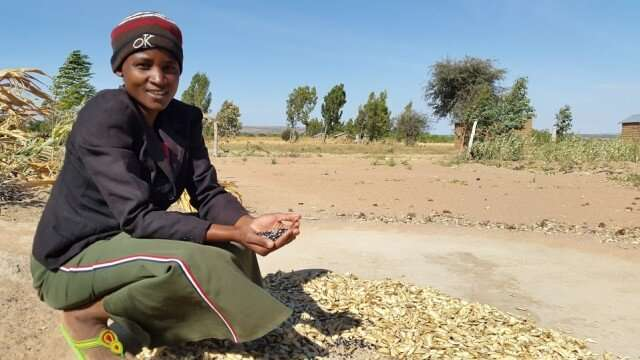 Tanzanian farmers boost diets, mental health with sustainable methods
