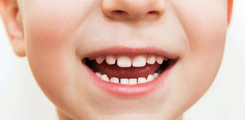 Teeth contain detailed records of lead contamination in humans and other primates