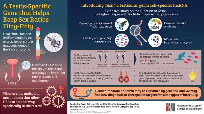 Testis-specific gene involved in sex ratio regulation discovered