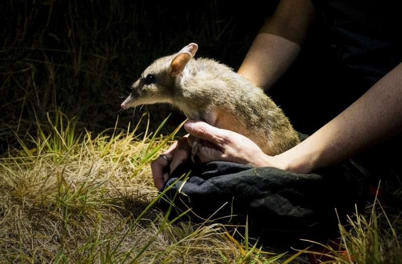 The announcement is a rare conservation win in Australia, which environmentalists say has the world's worst mammal extinction ra
