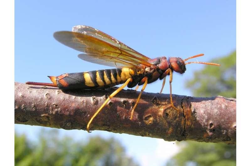 Las hormigas, abejas y avispas de Canadá, Alaska y Groenlandia: una lista de verificación de 9250 especies