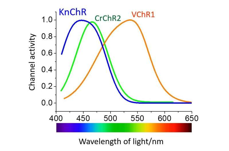 The bluest of blue: A new algae-based switch is lighting up biological research!