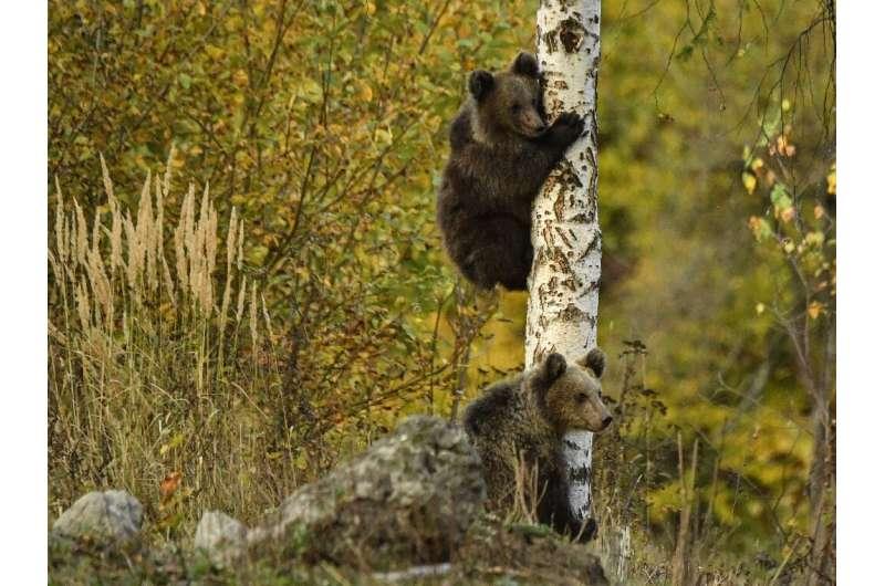 Proiectul recensământului include și înființarea unui sanctuar pentru urși.