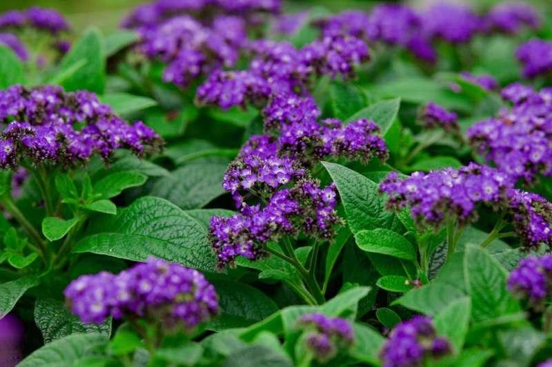 La danza diaria de las flores que siguen al sol es más fascinante de lo que la mayoría de nosotros creemos
