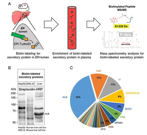 The dynamic tracking of tissue-specific secretory proteins