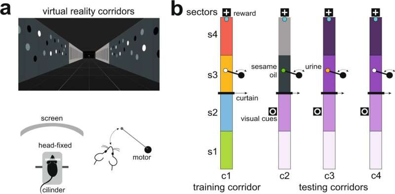 The influence of pheromonal signals on memory generated in the hippocampus