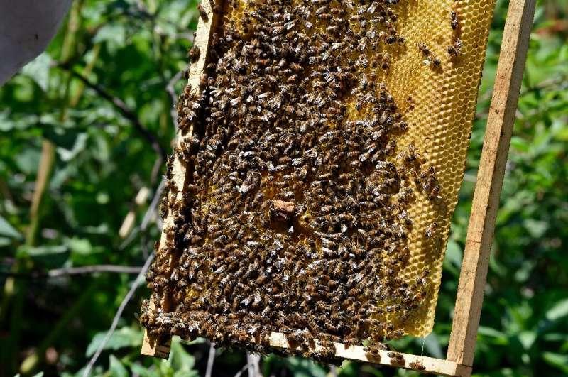 El sistema rescata a más de 200 abejas al año