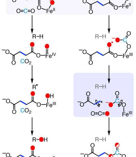 The pathway for producing ethylene