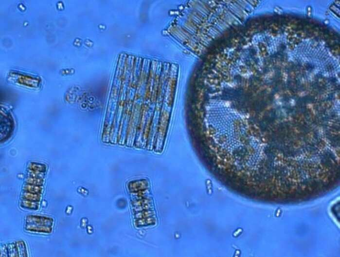 The 'phytoplankton factory' -- from nutrients to algae growth