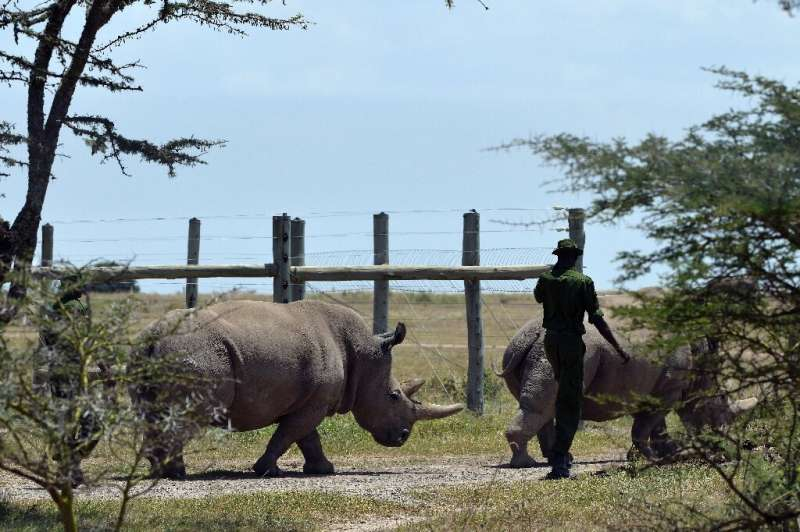 The state-funded census also counted 1,739 rhinos including two northern white rhinos
