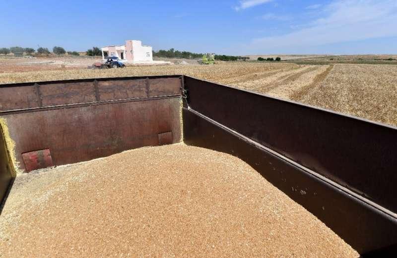 La Organización de las Naciones Unidas para la Agricultura y la Alimentación estima que durante el siglo pasado, alrededor de las tres cuartas partes de la diversidad en el mundo