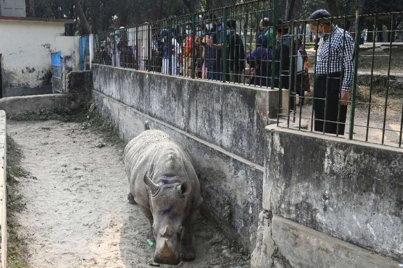 The Bangladesh National Zoo said the pandemic had blocked recent efforts to bring in a male rhino from Africa for Kanchi