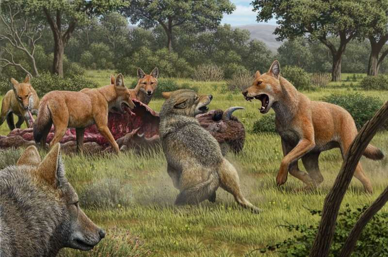 The dire wolf was a distinct species, different from the gray wolf, biologists discover