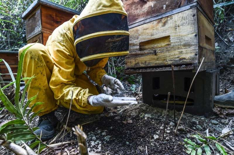 The government's agriculture institute denies any link between the expansion of avocado crops and bee deaths