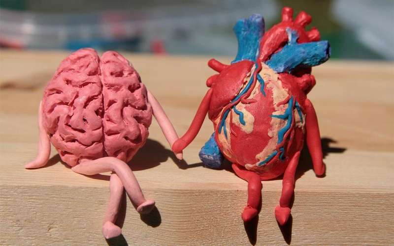 The neural mechanism of a circulatory response to stress