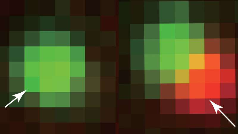 Theory of bubbles lifts cell biology into a new, more quantitative era