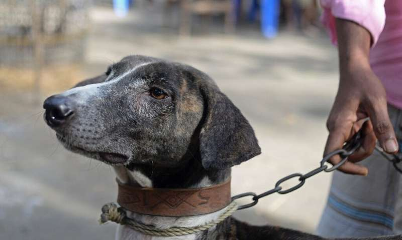 The rare Sarail hound is a breed on the brink of extinction