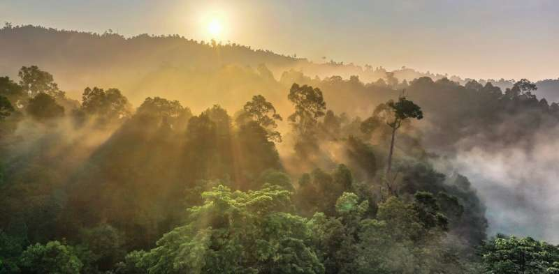 There aren't enough trees in the world to offset society's carbon emissions – and there never will be