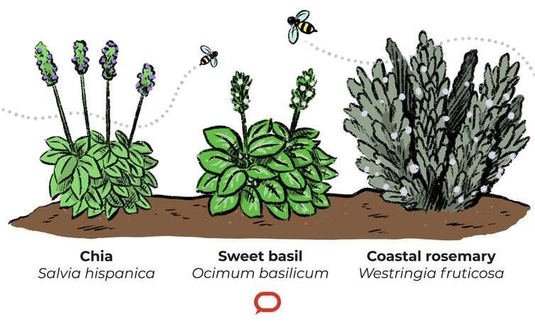 Estos 3 consejos te ayudarán a crear un jardín próspero y apto para polinizadores este invierno