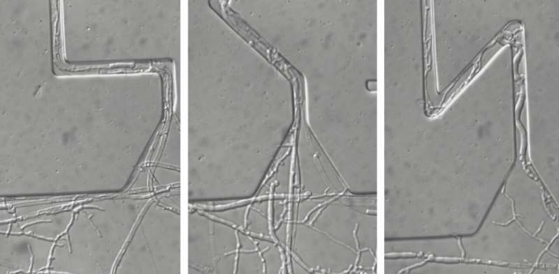 The secret life of fungi: how they use ingenious strategies to forage underground