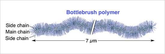 The world's longest bottlebrush polymer ever synthesized