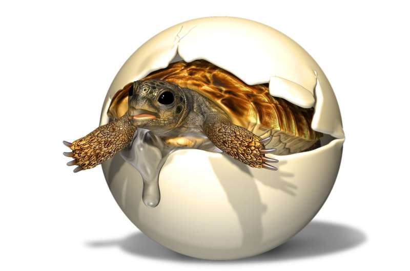 Thick-shelled turtle egg with embryo still inside from the Cretaceous period found in China