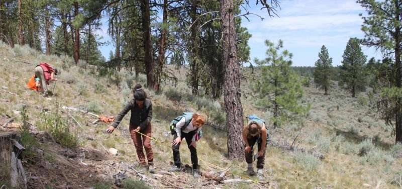 Thinning moderates forest fire behavior even without prescribed burns – for a while