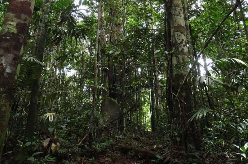 This forest has stayed wild for 5,000 years -- we can tell because of the soil