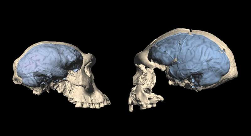 This photo from the University of Zurich shows skulls of early homo from Dmanisi, Georgia (specimen D4500, L) and Sangiran, Indo