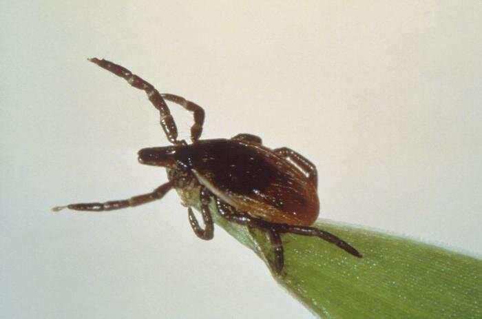 tick , Lyme disease