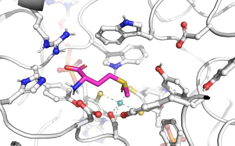 Tiny amino acid differences can lead to dramatically different enzymes