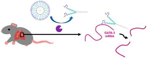 Tiny bubbles: Treating asthma with gene-silencing nanocapsules