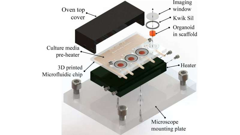 Tiny brains grown in 3D-printed bioreactor
